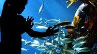 Sealife Fischbecken